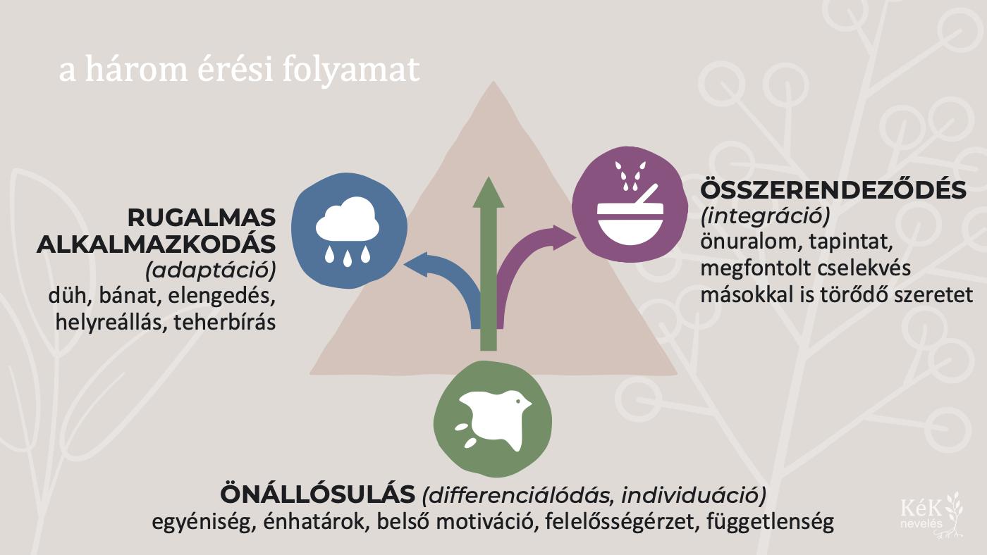 A három érési folyamat