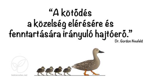 kotodes-definicio-kek-neveles