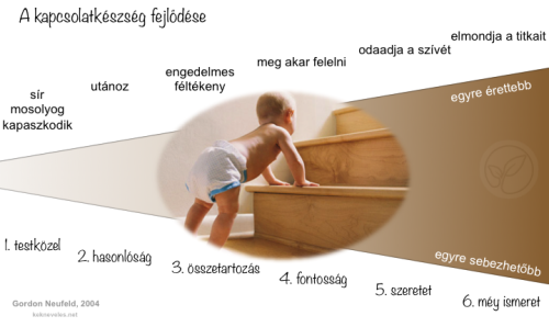 gyokerek-kapcsolatkeszseg-fejlodese-kek-neveles