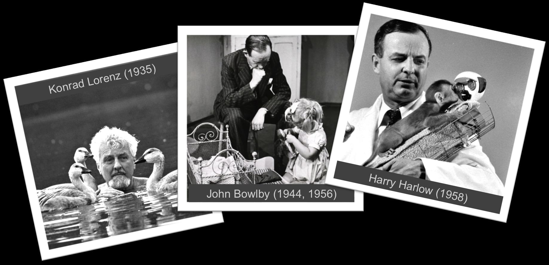A kötődéselmélet úttörői: Lorenz, Bowlby és Harlow