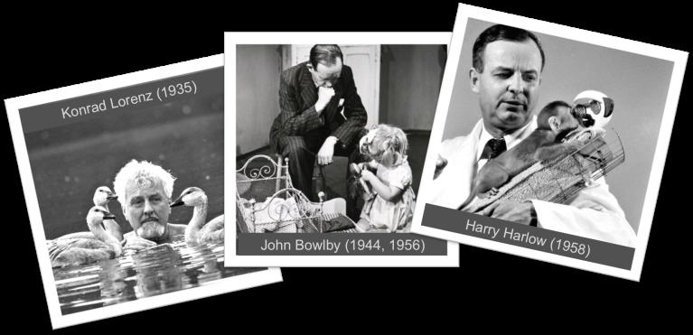 lorenz-bowlby-harlow-kek-neveles