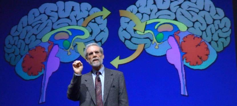 A társas agy