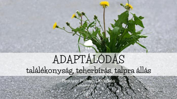 adaptalodas-1