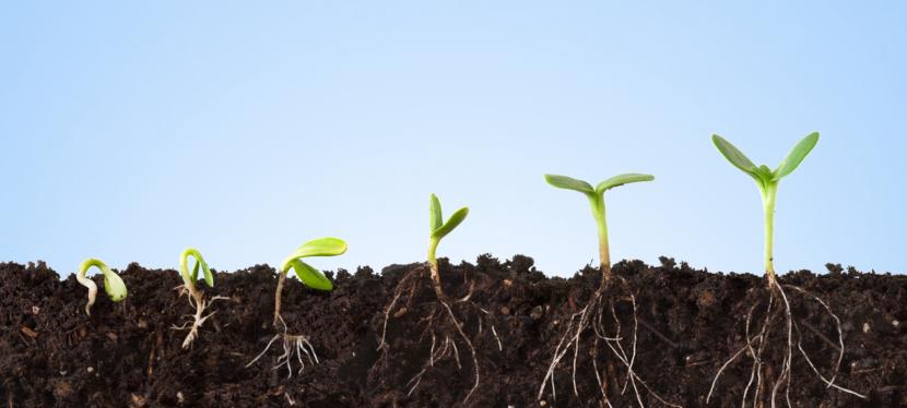 A kötődés gyökerei – A kapcsolatkészség fejlődésének hatszakasza