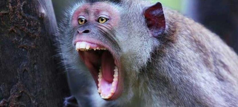 Miért hatásos a kiabálás, amikorhat?