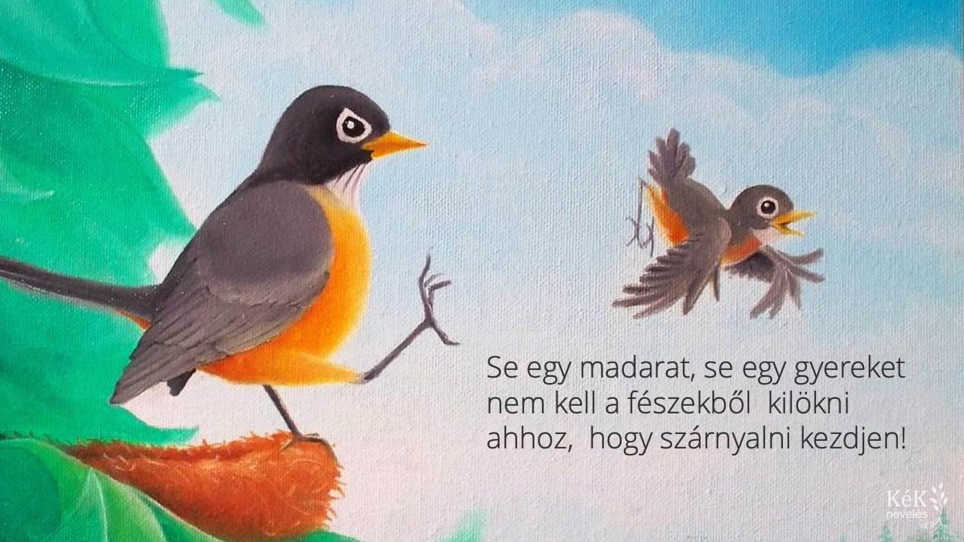 Se egy madarat, se egy gyereket nem kell a fészekből kilökni ahhoz, hogy szárnyalni kezdjen!